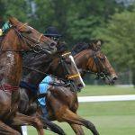 地方競馬の購入なら【楽天競馬】がおすすめ!お得な登録方法を紹介!